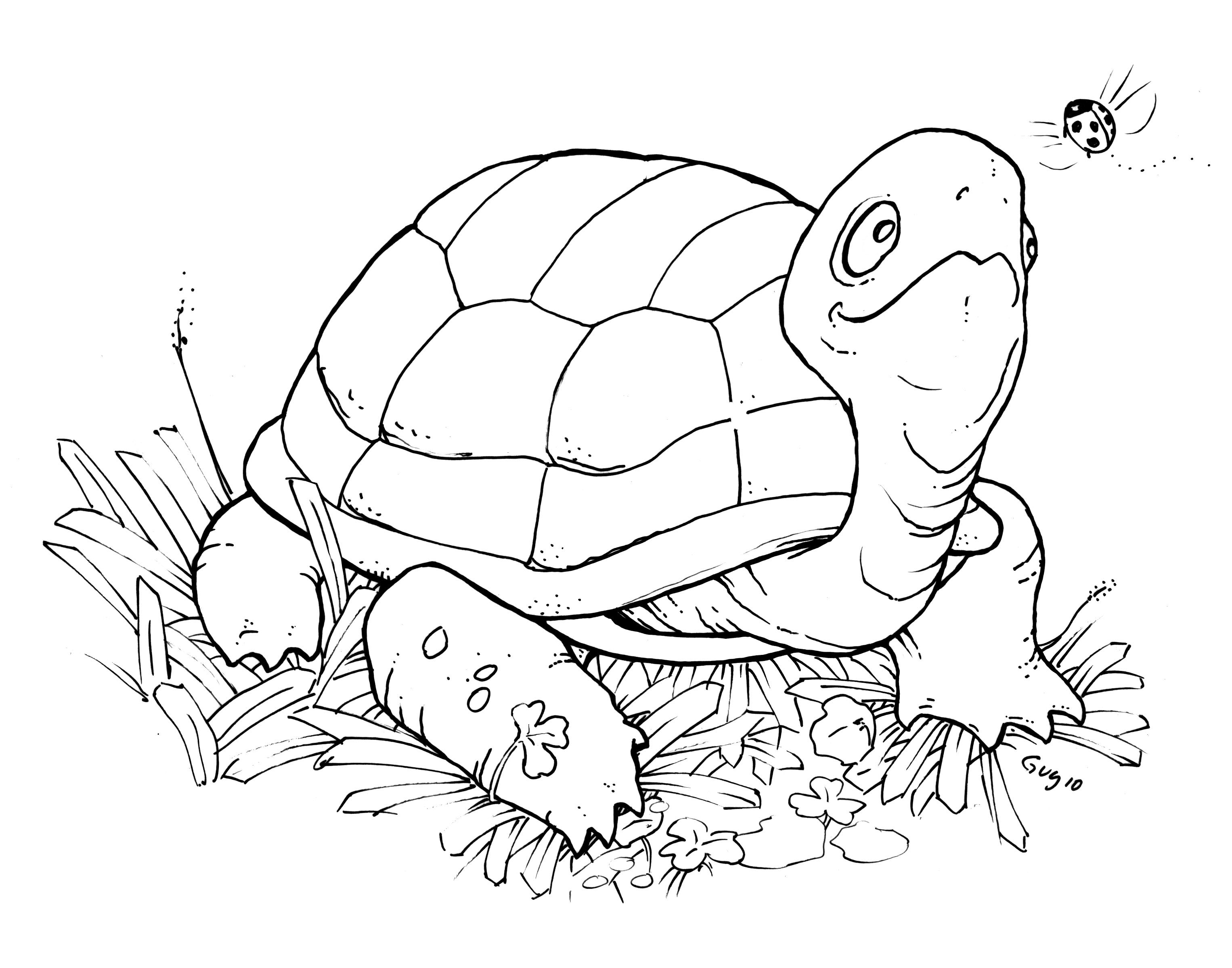 Free Printable Turtle Coloring Pages For Kids | Animal Place