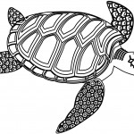 Turtles Coloring Page Pictures