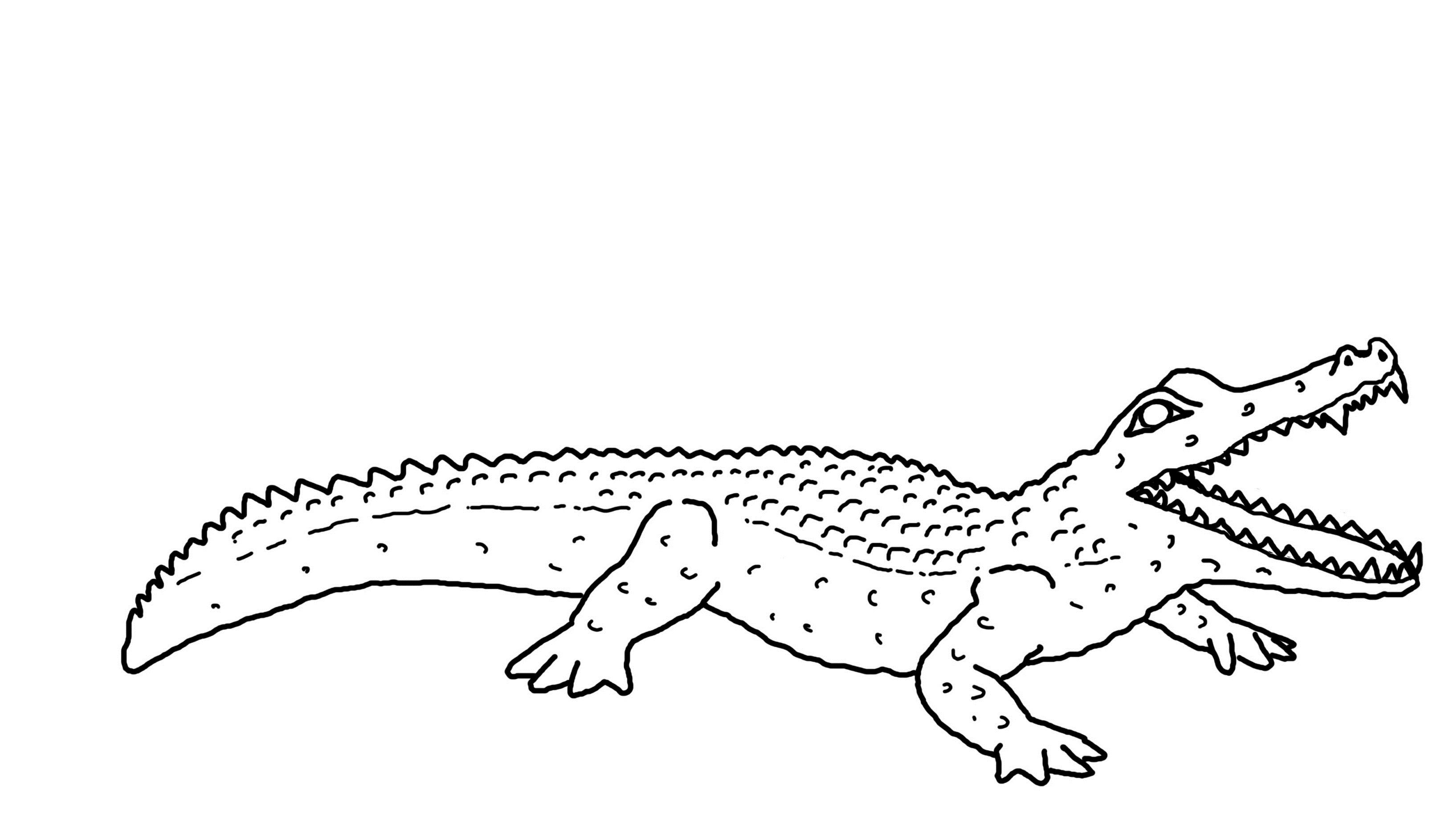 Free printable alligator coloring pages for kids animal for Alligator coloring pages