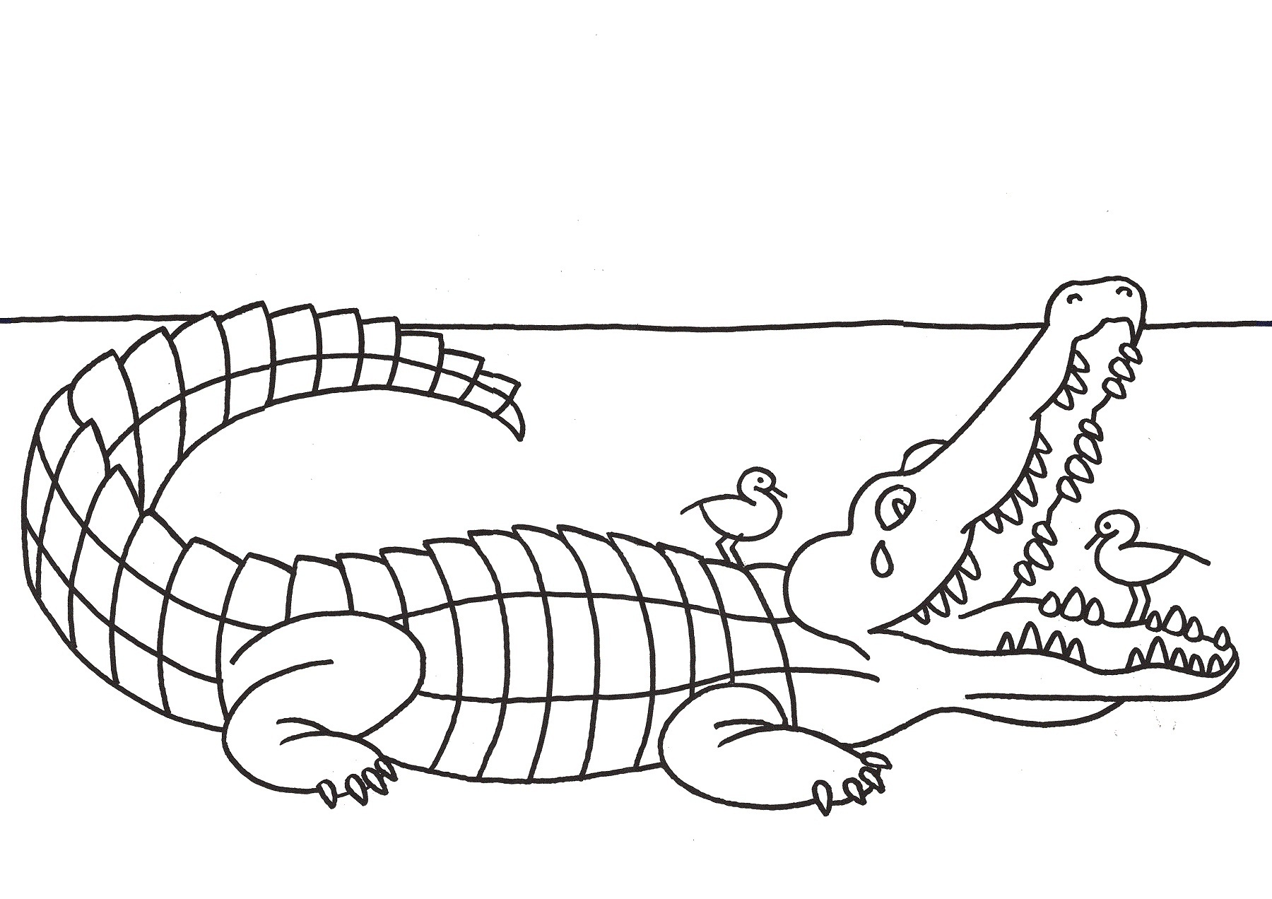 alligator coloring pictures virtren com