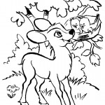 Baby Deer Coloring Pages Image