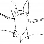 Bat Coloring Page for Kids Picture