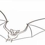 Bat Coloring Pages for Kids Picture
