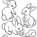 Bunny Rabbit Coloring Pages Image