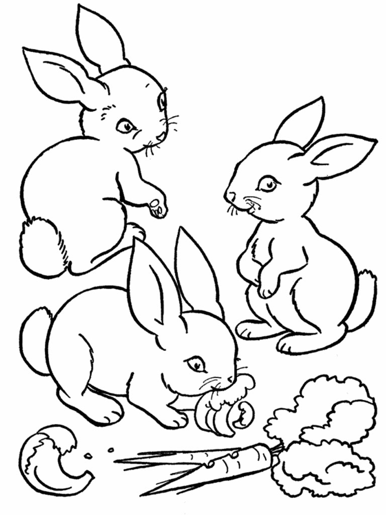 rabbit coloring pages to print contegri com