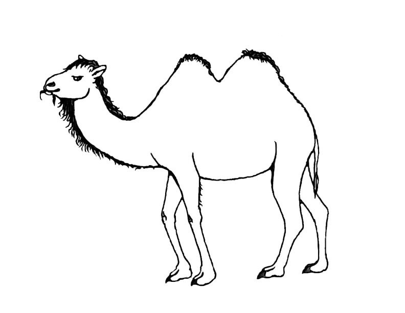 Printables for children to download camel coloring page | 612x792