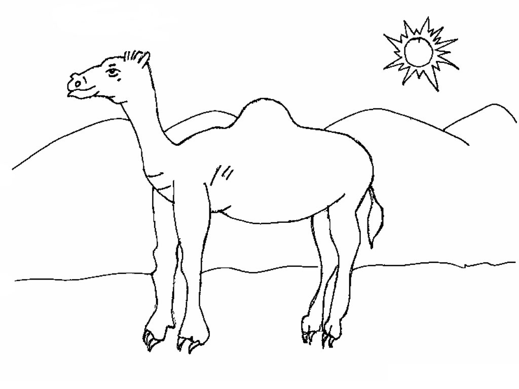 Free Printable Camel Coloring Pages For Kids Animal Place Camel Colouring Page