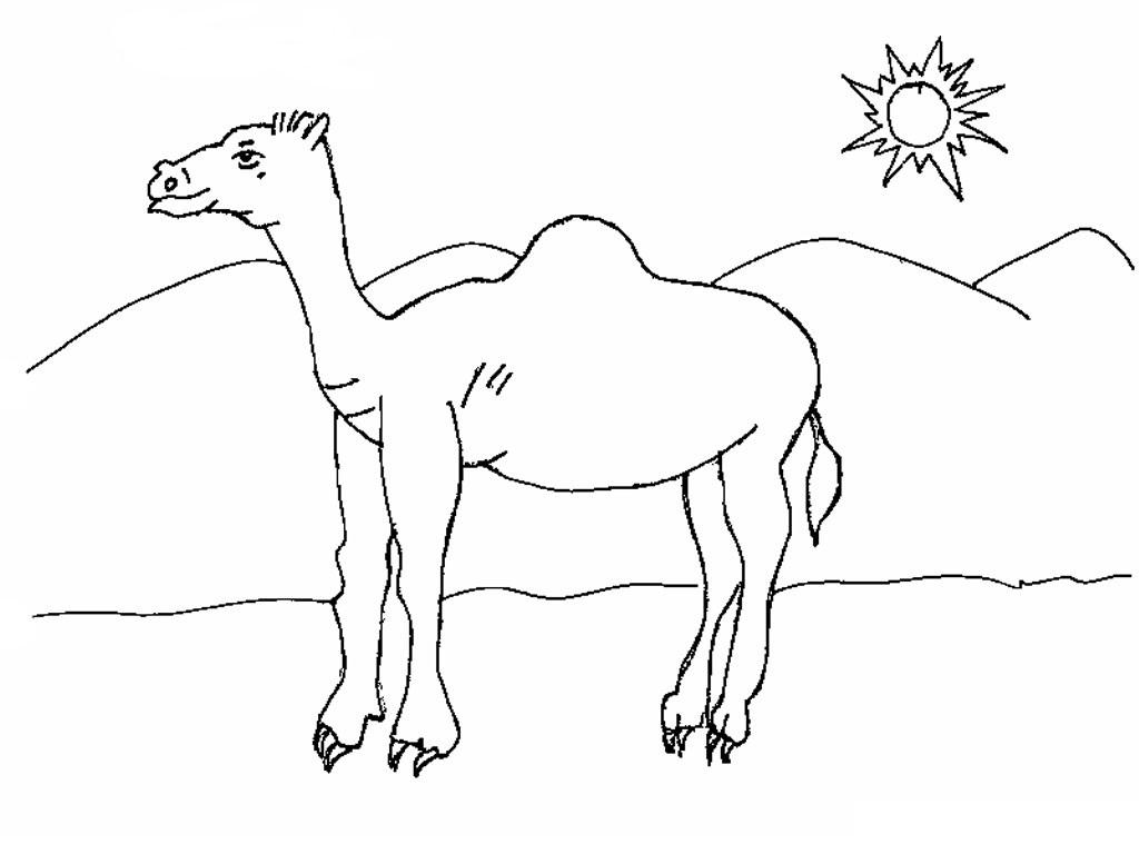 Camel Coloring Page Miakenasnet