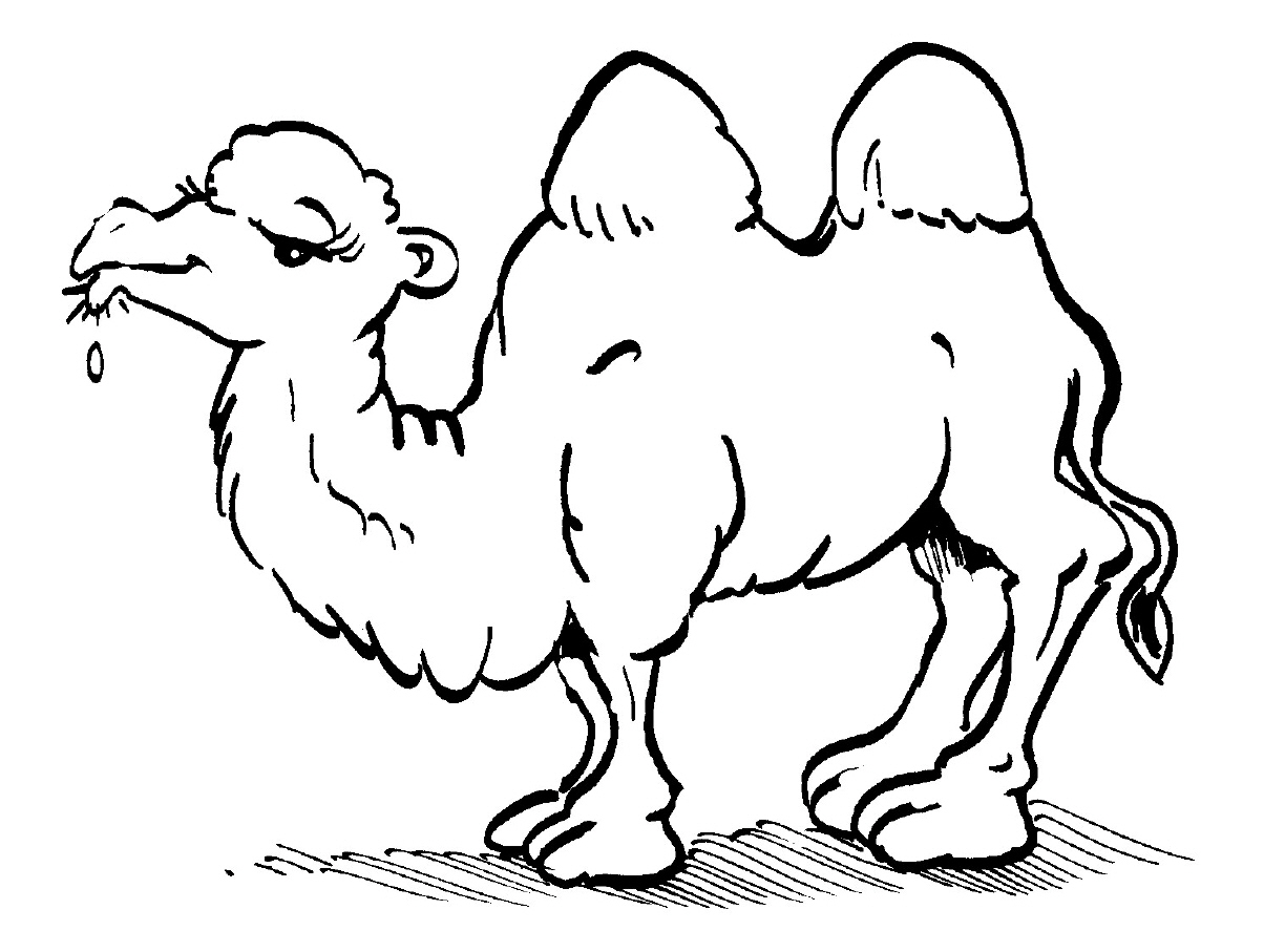 camel coloring pages for kids - photo#17