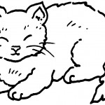 Cat Coloring Page Photos