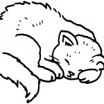 Cat Coloring Page Picture