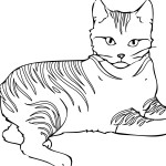 Cat Coloring Page for Kids Images