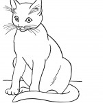 Cat Coloring Pages Photo