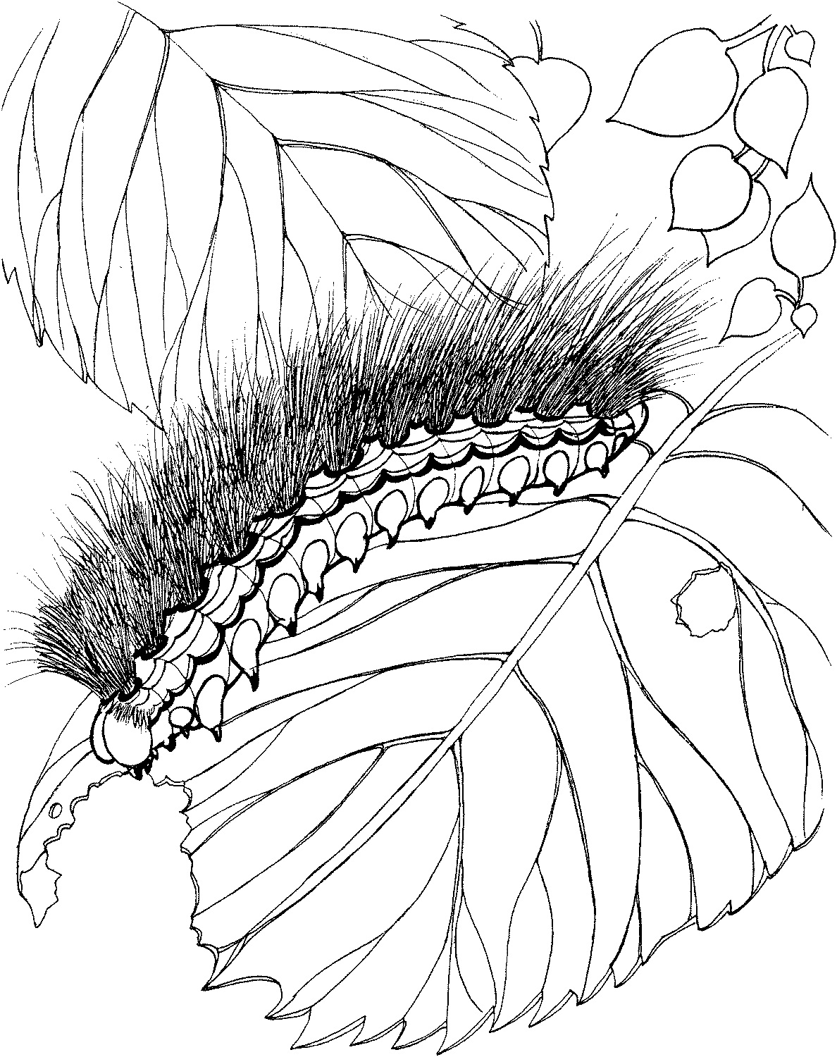Free Printable Caterpillar Coloring