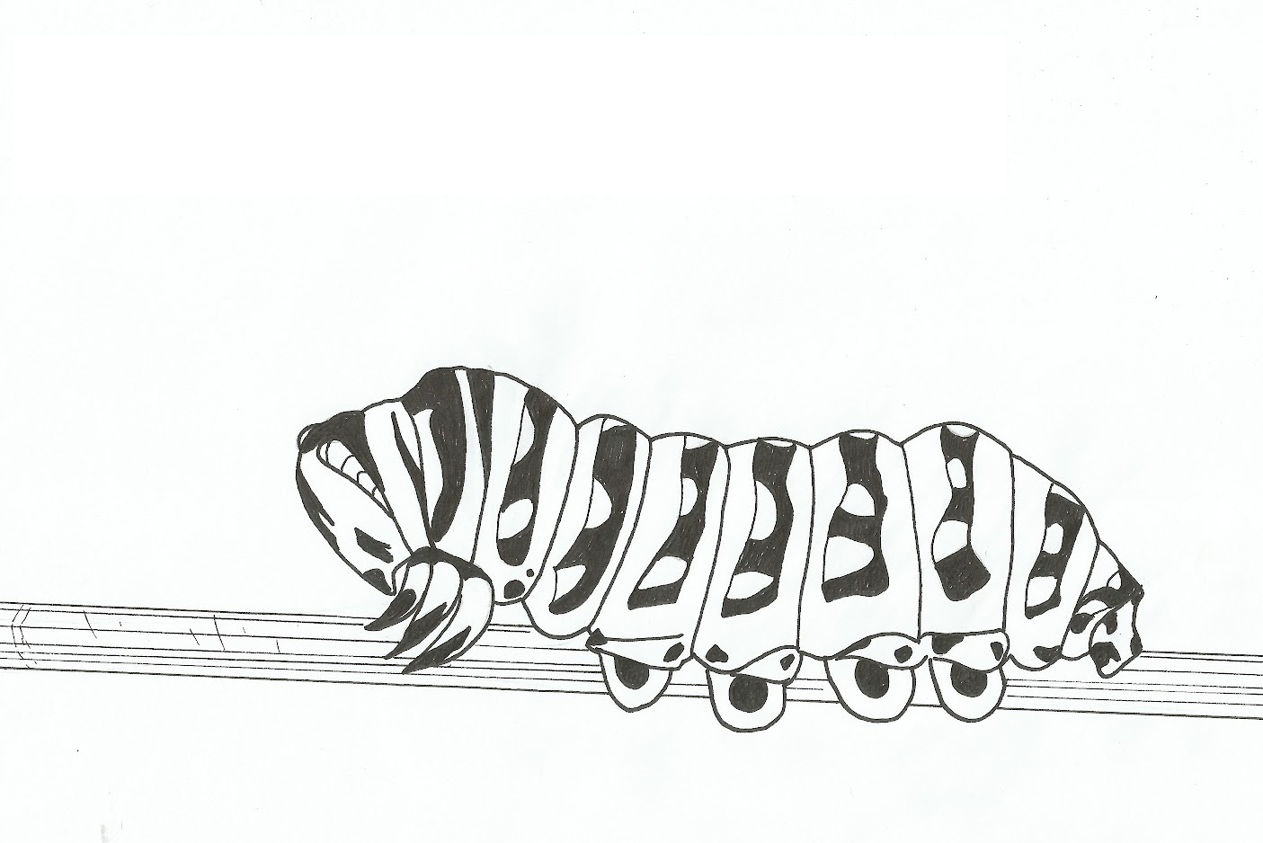 - Free Printable Caterpillar Coloring Pages For Kids Animal Place