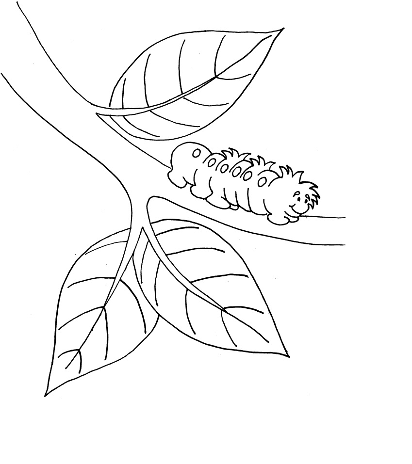 Free Printable Caterpillar Coloring Pages For Kids ...