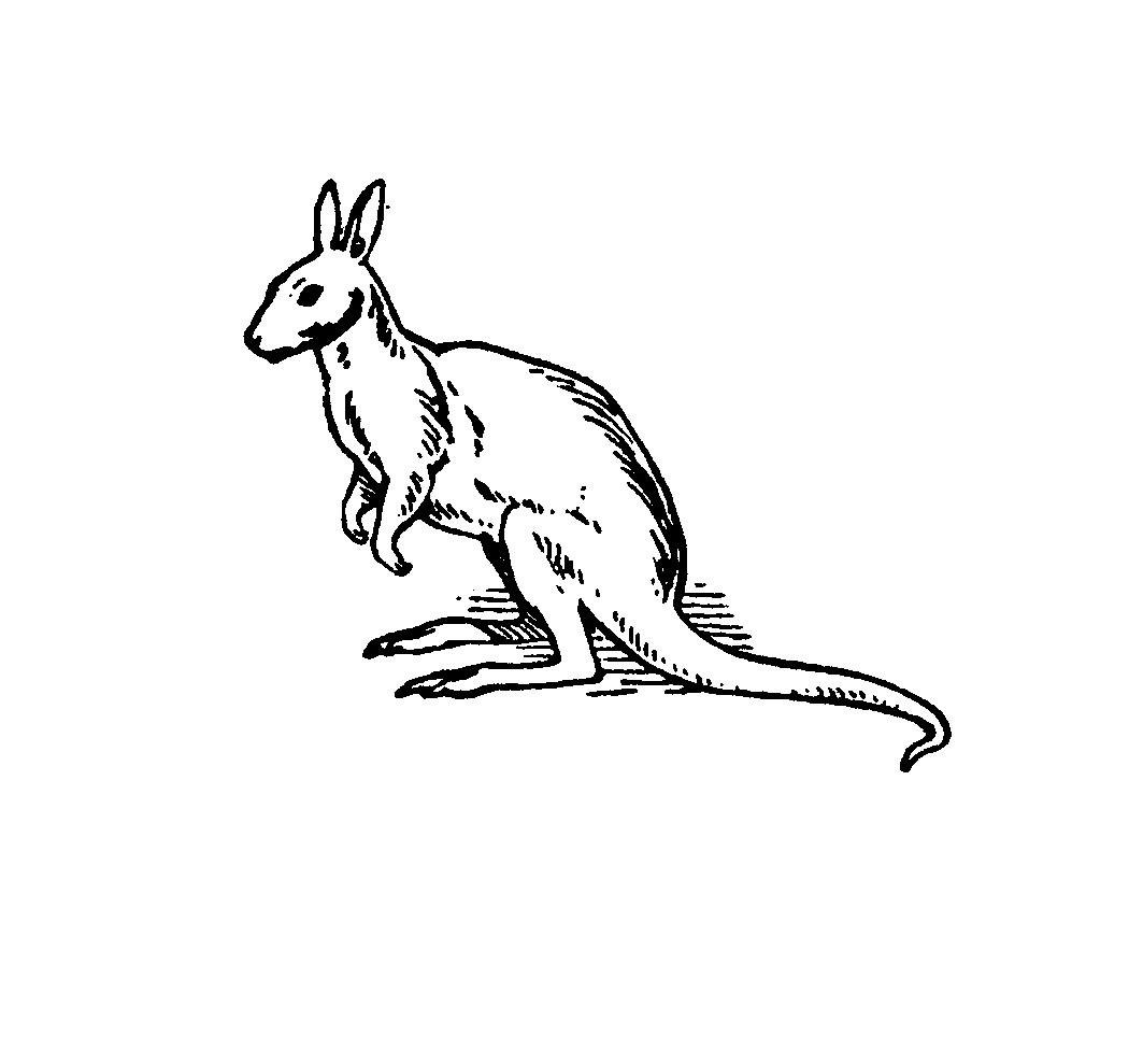 Free coloring pages kangaroo - Coloring Page Kangaroo Image