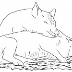 Coloring Page Pig Picture