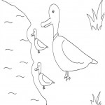 Coloring Page of Duck Photos
