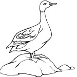 Coloring Page of Duck Pictures