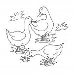 Coloring Page of Ducks