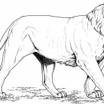 Coloring Page of Lion Picture