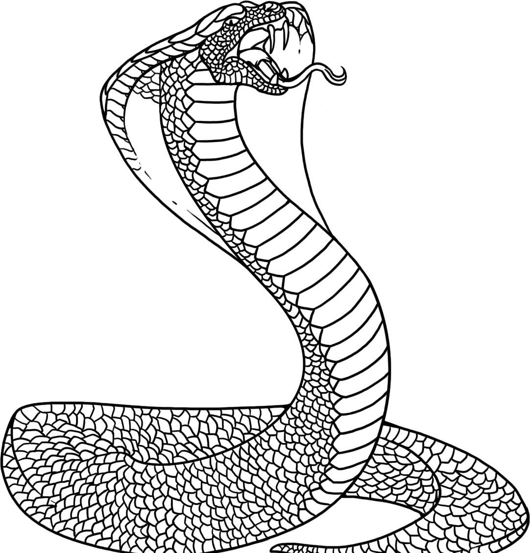 Spotted eagle ray coloring pages - Coloring Page Of Snake Image