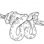 Coloring Page of Snake Photos