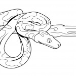 Coloring Page of Snake Pictures