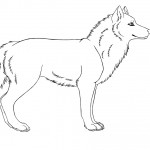 Coloring Page of Wolf Photos