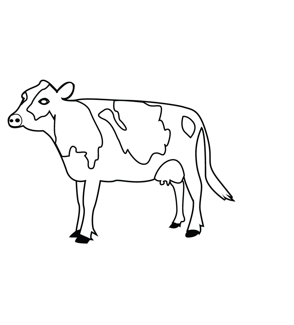 Coloring pages cow - Coloring Pages Cow Images