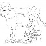Coloring Pages Cow Photo