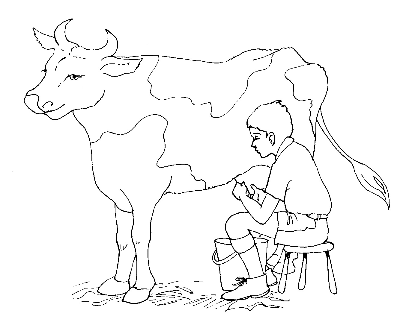 Coloring pages cow - Coloring Pages Cow Photo