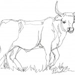 Coloring Pages Cow Picture