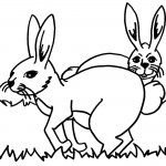 Coloring Pages Rabbit Images