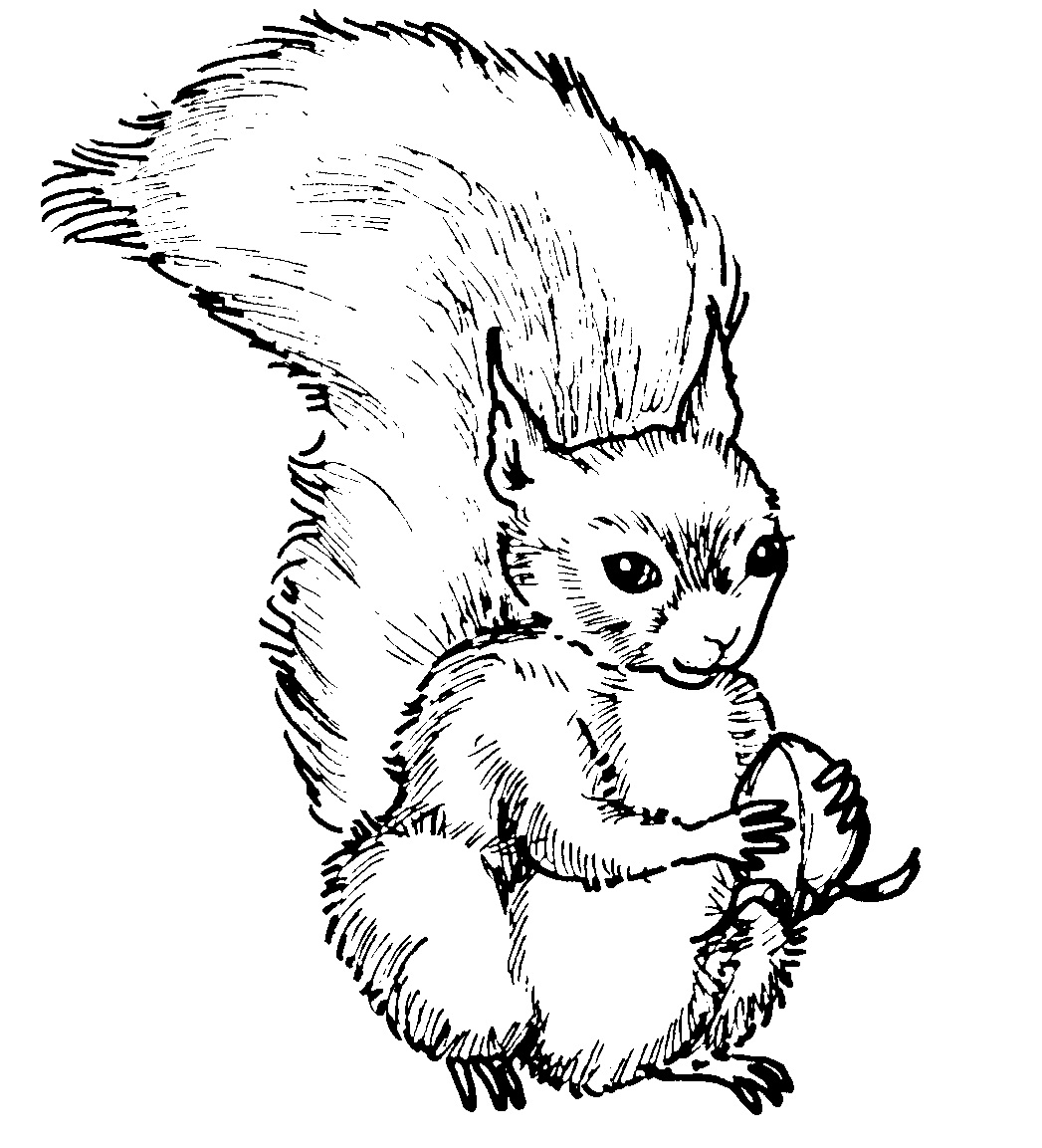 Free Printable Squirrel Coloring Pages For Kids | Animal Place
