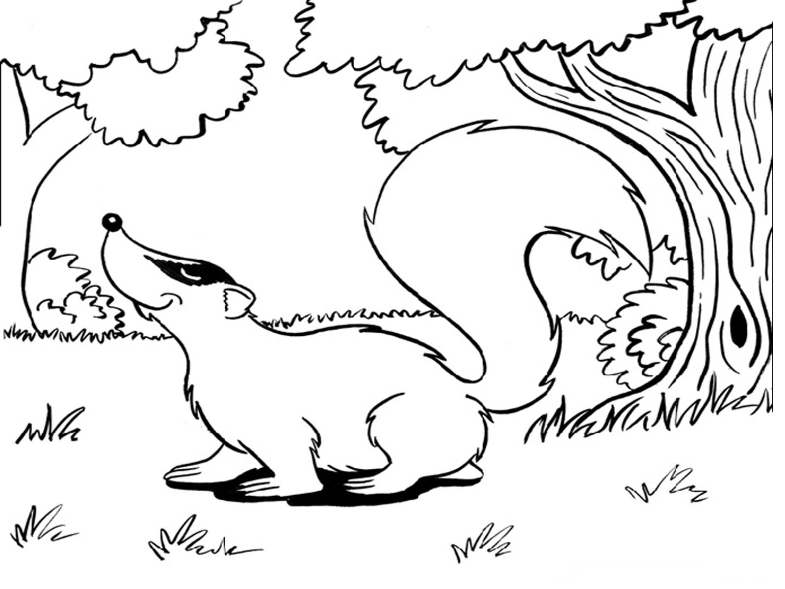 Children's coloring pages animals - Free Printable Squirrel Coloring Pages For Kids