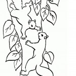 Coloring Pages Squirrel Photo