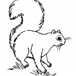 Coloring Pages Squirrel Picture