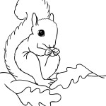 Coloring Pages Squirrel Pictures