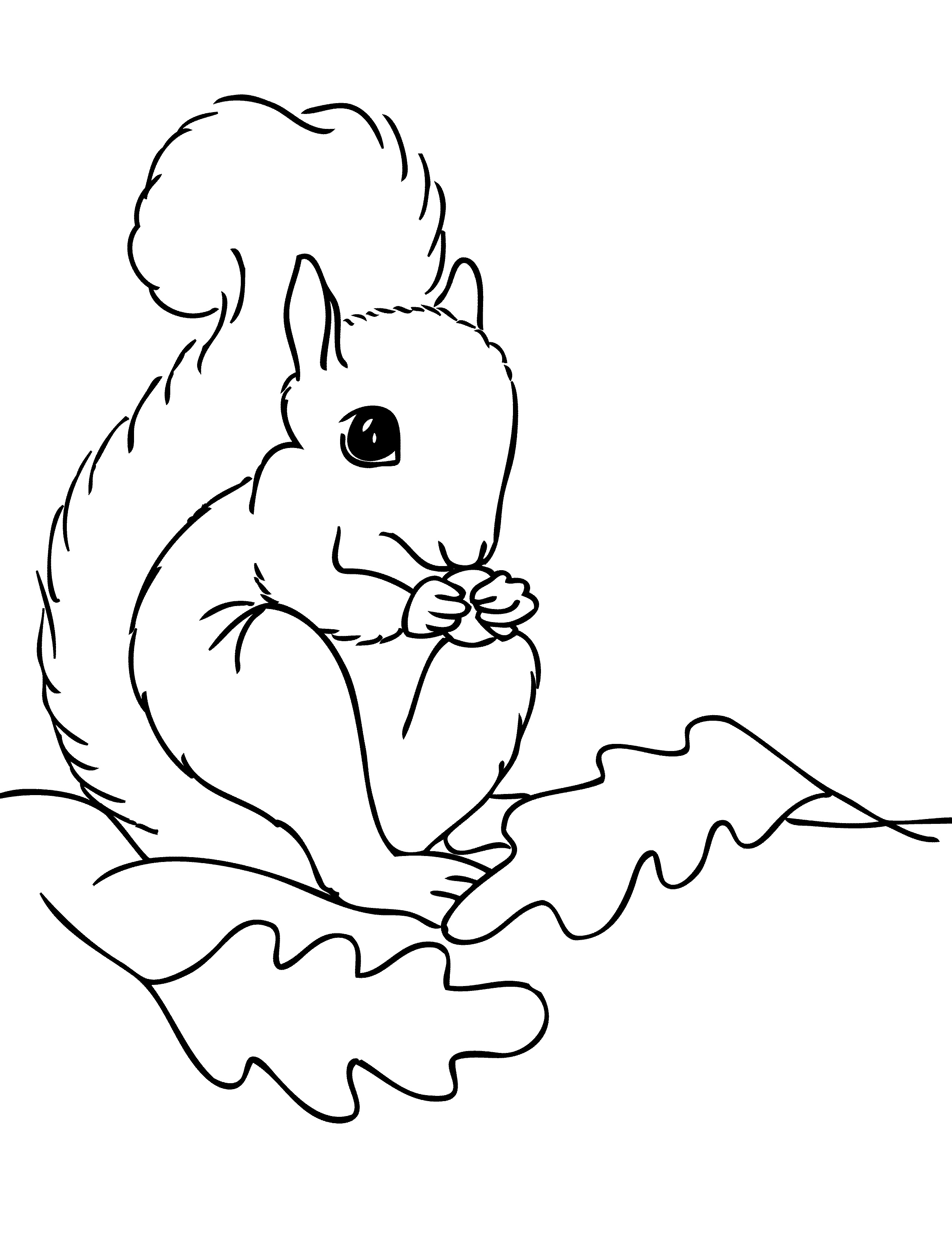 printable coloring pages of squirrels - free printable squirrel coloring pages for kids animal place
