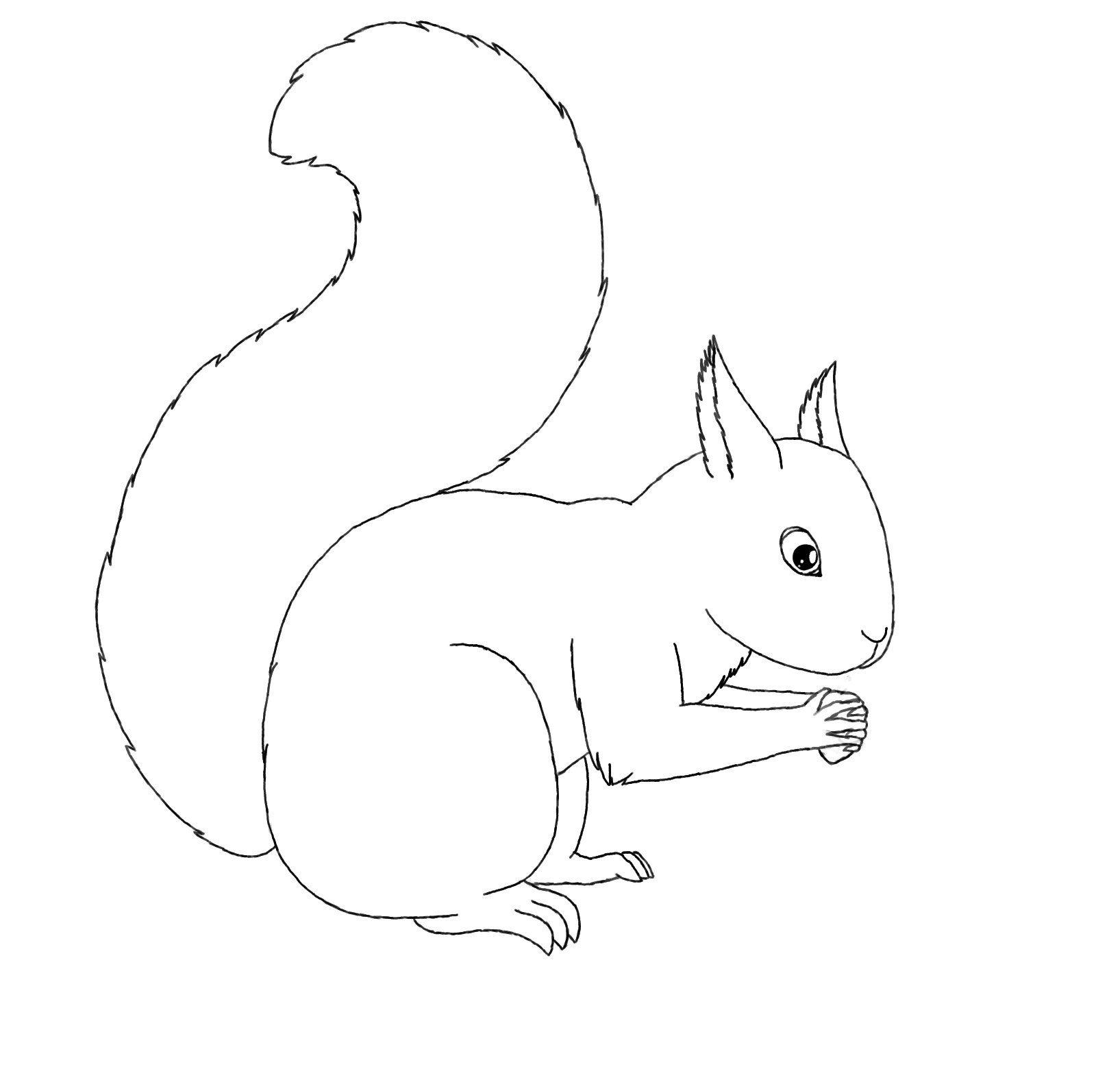 free printable squirrel coloring pages for kids animal place