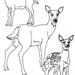 Coloring Pages of Deer Photo