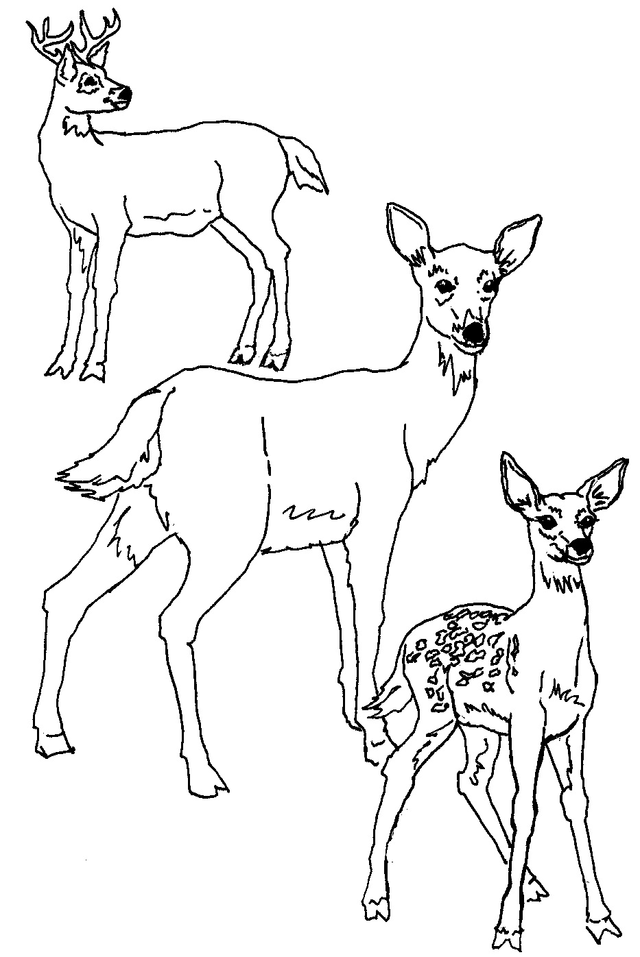 Free coloring page deer - Coloring Pages Of Deer Photo Free Printable Deer Coloring Pages For Kids Animal Place On Free