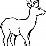 Coloring Pages of Deer Picture
