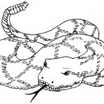 Coloring Pages of Snake