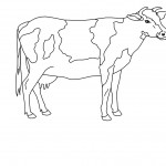 Cow Coloring Page Images