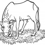 Cow Coloring Page Photos