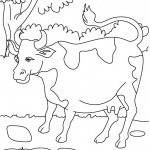 Cow Coloring Page for Kids Photos