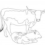 Cow Coloring Pages for Kids Photos